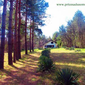 Šumska kuća BUBAMARA – Deliblatska peščara