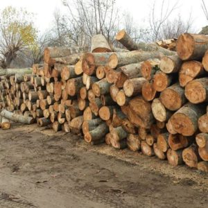 Drvara Royal – Prodaja ogrevnog drveta Subotica